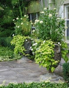 36 Container Garden Recipes for a Stunning Display front porch urn planters white green chartreuse Container Design, Container Plants, Container Gardening, Porch Urns, Front Porch, Front Entry, White Dahlias, Urn Planters, Potato Vine Planters
