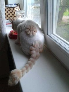 Absolutely funny shaved cat picture nice
