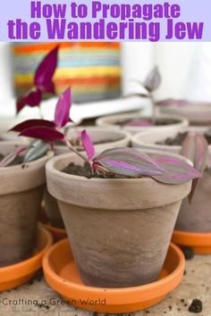 Houseplant that's easy to grow and propagate. And it's non-toxic for cats!