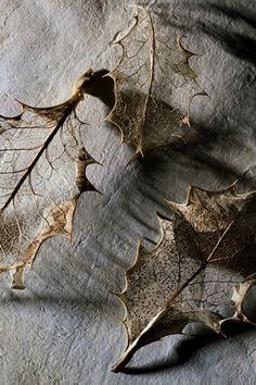 ~ feuille séchée ~ #wabi_sabi #wabisabi #automne #tisac