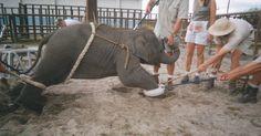 Repudiemos la negativa de Sevilla a declararse como ciudad libre de circos con animales! FIRMA...