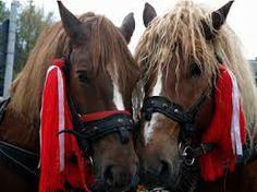 borsa maramures cai - Google Search Horses, Google Search, Animals, Ideas, Animales, Animaux, Animal, Animais, Thoughts
