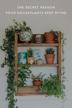 The Secret Reason Your Houseplants Keep Dying #purewow #home