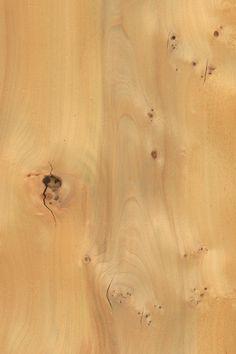 Rüster Maser   Furnier: Holzart, Robinie, Blatt, hell, braun, Laubholz #Holzarten #Furniere #Holz