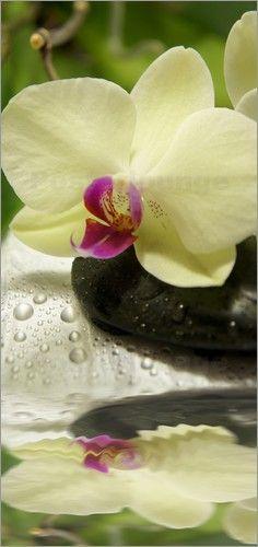 Wellness mit Orchideen und Steinen