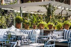 The_Ivy_Chelsea_Gardens_