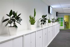 Office Plants – Ambius plant rental and interior landscaping services