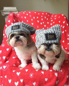 Adorable Shih Tzus ==> visit http://www.amazingdogtales.com/gifts-for-shih-tzu-lovers/