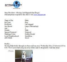 Missing Lab/Shepard