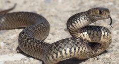 Bij het tover oefengevecht tussen Harry en Malfidus werd er een slang getoverd om Harry aan te vallen, zo komt Harry erachter dat hij sissel taal spreekt of beter gezegd slangen taal.