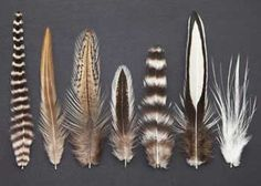Whitnig Hen Capes lines: Whiting - Hebert - Coq de Leon - Brahma - American - Laced - Spey.