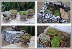 Succulent Gift Box Perfect Gift for by SucculentsAndMore1 on Etsy