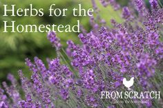 herbs for the homestead  - From Scratch