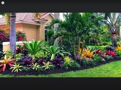 Designing A Colorful Landscape Despite A Blend Of Shade And Sun - Turf Tropical Backyard Landscaping, Front House Landscaping, Tropical Garden Design, Florida Landscaping, Outdoor Landscaping, Florida Gardening, Landscaping Ideas, Front Yard Garden Design, Front Garden Landscape