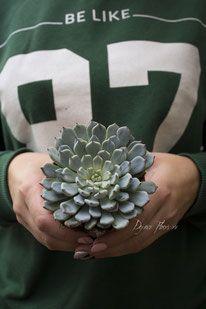 Суккуленты виды описание название на нашем сайте - https://www.dejavu-flowers.ru/succulents-kazan/ , Наша группа Вконтакте вступайте - https://vk.com/succulents_echeveria.