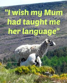 What if you hadn't learnt the languages you did as a child?