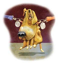 Cani contesi: in Italia 4mila casi l'anno. Separazioni al vetriolo per l'affido del pet…