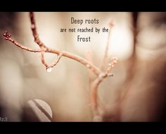 Deep roots are not reached by the frost