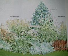 Onamental grass garden