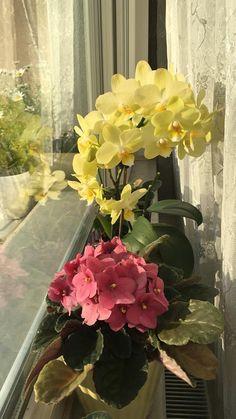 Orkidenin Çiçek Açması İçin Ne Yapmalı? Bonsai, Orchids, Planters, Plants, Flowers, Bonsai Trees, Lilies, Orchid, String Garden