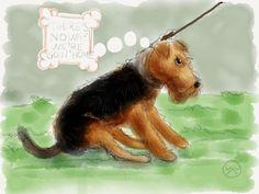 Stubborn Welsh Terrier!