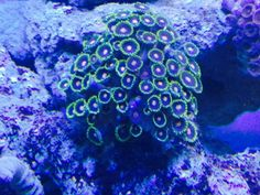Coral Aquarium