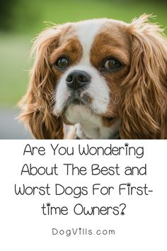 Are you wondering about the best and worst dogs for first-time owners?    While all dogs make lovely pets, some sensitive breeds or hard to train ones can be a handful for an inexperienced dog owner. Best Large Dog Breeds, Best Small Dogs, Most Popular Dog Breeds, Best Dog Breeds, Best Dogs, All About Puppies, Dogs And Puppies, Best Guard Dogs, Diy Dog Toys