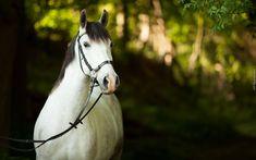 Koń, Uzda