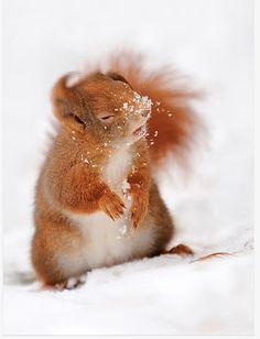 Squirrel hit by snowball.  photo by Marco Sartori.    original source: http://1x.com/photo/40080