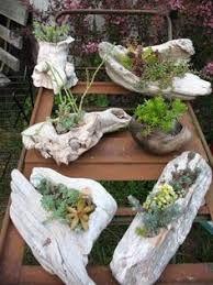 Resultado de imagem para driftwood succulents