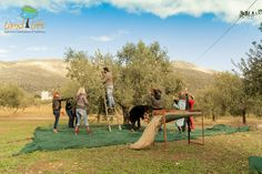 Experience Nafplio and the Peloponese - Landlife Travel Greek Dancing, Greece Tourism, Pure Olive Oil, Paragliding, Tour Operator, Horse Riding, Rafting, Kayaking, Dolores Park