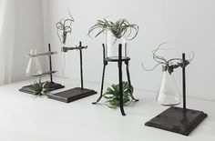 Better living through chemistry? We like to repurpose vintage laboratory equipment to make vases and tabletop tableaux to display flowers, fronds, and stems. Here are 10 of our favorites: