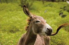 PETA India staffers rescued Parineeta, a donkey, from the side of the road, where she had been abandoned with a broken leg after spending years hauling building materials for railroads. She now lives in the beautiful Nilgiri hills with other retired working animals.