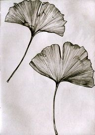 Chadwick Bell Spring 2009 Inspiration: Gingko Leaves