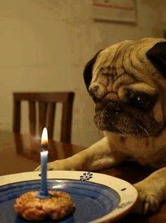 …make a wish!!