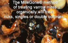 """The Mitegone method of treating varroah mites organically, will treat nuks, singles or double colonies. See """"Colony Size"""" on the home page for more information. Click through to read more. Bee Skep, Bee Keeping, Bees, Honey, Treats, Group, Board, Sweet Like Candy, Goodies"""
