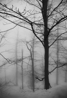 Nature Photography Tips For Sharper Photos – PhotoTakes Misty Forest, Dark Forest, Dark Photography, Black And White Photography, Photo D Art, Fade To Black, Dark Places, Winter Wonder, White Aesthetic