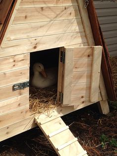Do you want to build a duck house or coop for your new ducks? Here are 37 of the best free DIY duck house plans we've collected from all over the net. Backyard Ducks, Backyard Birds, Chickens Backyard, Backyard Farmer, Chicken Shed, Diy Chicken Coop Plans, Chicken Coup, Duck Pens, Duck Duck