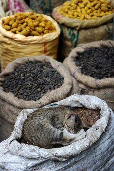 Gato dorme em cesto de especiarias na cidade indiana de Délhi. This kitten shall be my seed feed guardian <3