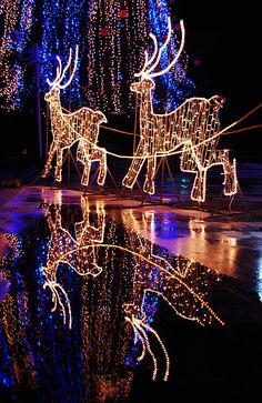 d0cb3d80f5 16 Best Outdoor Christmas Reindeer Decorations Lighted images