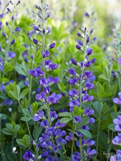 Add some of these beautiful, underused garden plants to add color and interest to your landscape.