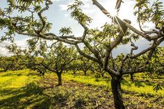 Forge Hill Orchards by stevenseighman