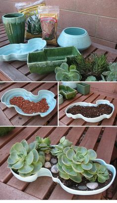 Make The Cutest Succulent Planters | DIYmazing