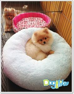 I love this doggie bed! - Dogilike.com