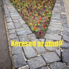 Keresed az utad? Segíthetek :-) #my_path #your_path #BecauseWeCan