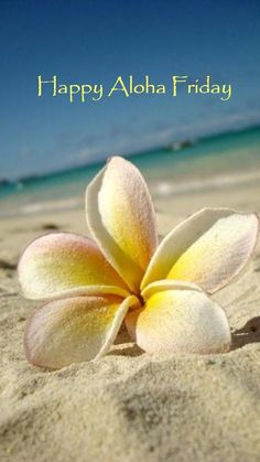 Hawaii V by ~breathe-in-life on deviantART. Plumeria in the sand on the beach. Love Hawaii, the beach and Plumeria's! Kauai, Beautiful World, Beautiful Places, Beautiful Pictures, Wonderful Places, Simply Beautiful, Paradis Tropical, Hawaiian Islands, Tropical Paradise