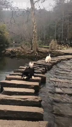 Funny And Cute Pets & Animals watch full : visit [youtu. - Funny And Cute Animals Videos - Cute Puppy Videos, Cute Animal Videos, Funny Animal Videos, Cute Funny Animals, Funny Animal Pictures, Funny Dogs, Cute Puppy Breeds, Cute Puppies, Dogs And Puppies