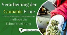 Der beste Weg um das ganze Jahr in den Genuss einer zufriedenstellende Ernte zu kommen, ist sicherzustellen, dass man sich gut um seine Cannabis Ernte gekümmert hat. Die Methoden zur Lagerung…Mehr Cannabis, Mary, Ganja, Harvest, Tutorials, Safety