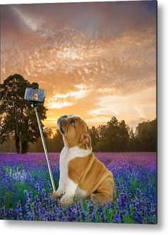 Selfie Metal Print featuring the mixed media English Bulldog Selfie by Marvin Blaine