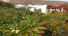 "Welcome to the ""Villa Iolanthe in Paros, Greece. Paros Greece, Luxury Villa, Building A House, Greek, Island, City, Plants, Luxury Condo, Build House"